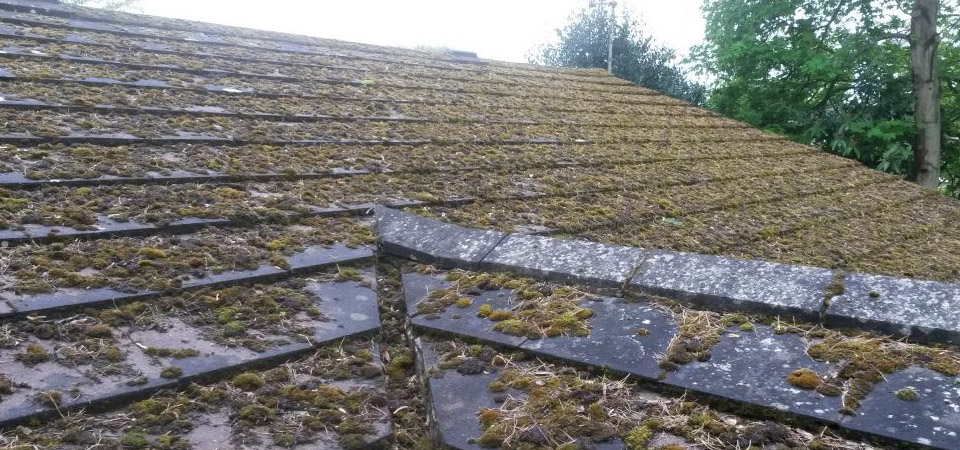 Moss Removal Empire Roofing